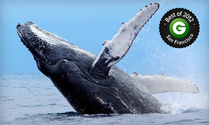 SF Bay Whale Watching - Fort Mason: $125 for Whale Watching for Two from SF Bay Whale Watching ($250 Value)