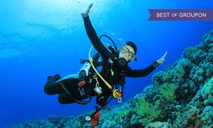 Dixie Divers: Two-Reef Snorkeling Trip, Discover Scuba Course, or Discover Scuba Pool Session at Dixie Divers (Up to 52% Off)