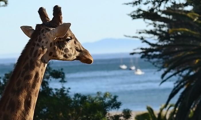 Santa Barbara Zoo - Waterfront: Santa Barbara Zoo Admission for a Couple or Family with Train Rides, Climbing, and Giraffe Feedings (Up to 40% Off)