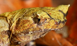 St. Louis Reptile Show: St. Louis Reptile Show for Two or Four on September 13 at 10 a.m. (Up to 54% Off)