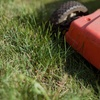 Up to 53% Off Mowing and Trimming Services