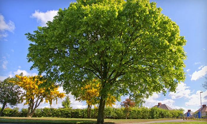 B.A. Donley Complete Grounds Maintenance - Southfield: $90 for Three Hours of Tree Trimming from B.A. Donley Complete Grounds Maintenance ($297 Value)