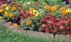 National Tree & Shrub - Greater Heights: Trees, Plants, Flowers, and Gardening Supplies at National Tree & Shrub (Up to 50% Off). Two Options Available.
