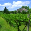 Valentino Vineyards & Winery – 66% Off Tasting, Tour & Seminar