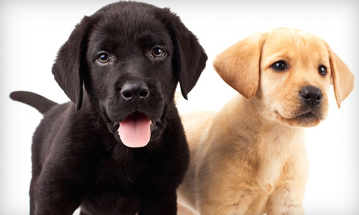 Tuscawilla Oaks Animal Hospital - Madison Creek: Three or Five Days of Daycare or Three Nights of Pet Boarding at Tuscawilla Oaks Animal Hospital (Up to 57% Off)