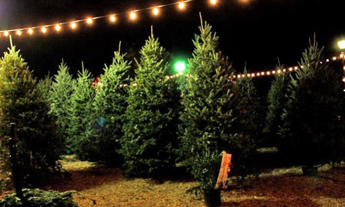 La Rouge Nursery - South Baton Rouge: $15 for $30 Toward a Fraser Fir Christmas Tree at La Rouge Nursery