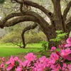 Up to 25% Off Admission to Magnolia Plantation and Gardens