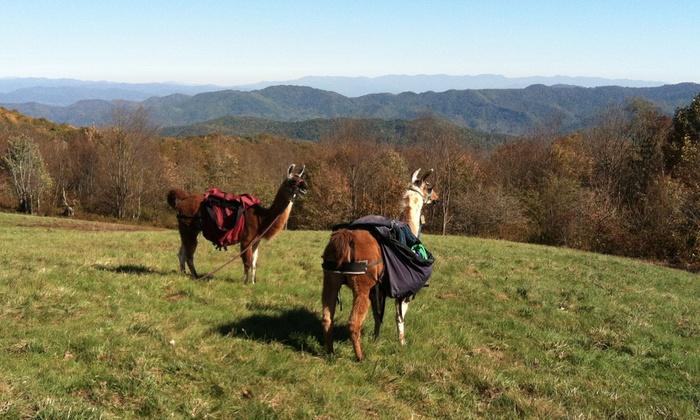 Smoky Mountain Llama Treks - Cosby: Llama-Farm Visit for 2, 4, or Up to 10 from Smoky Mountain Llama Treks (Up to 55% Off)