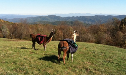 Llama-Farm Visit for 2, 4, or Up to 10 from Smoky Mountain Llama Treks (Up to 55% Off)