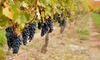 Coastal Vineyards - North Rockdale: Vineyard Tour for Two or Four with Souvenir Wineglasses and Totes at Coastal Vineyards (Up to 55% Off)