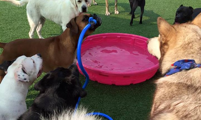 Puppingham Palace - Puppingham Palace: Three Days of Doggy Daycare at Puppingham Palace (50% Off)