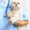 Visita veterinaria cani o gatti