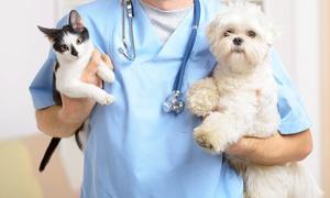 Studio Veterinario Associato Molinari De Boni 2: Visita clinica con vaccinazioni per cane o gatto