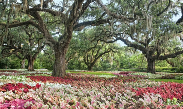 Brookgreen Gardens   Between Murrells Inlet And Pawleys Island: Admission  For Two Or Four At