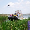 51% Off 60-Minute Airboat Tour