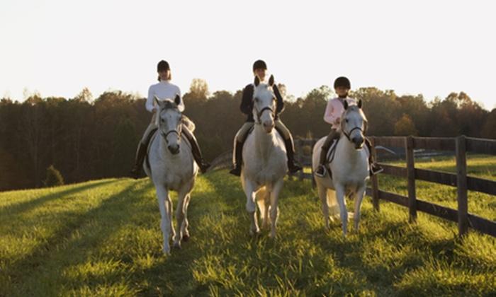 Pferde Erlebnis Scheibel - Dietramszell: Halb- oder Ganztages-Ausritt auf einem Leihpferd inkl. Verpflegung mit Pferde Erlebnis Scheibel ab 29,90 €