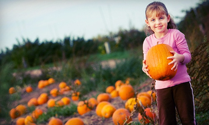Nicholson Farms - Pageland: Pumpkin-Smash or Scarecrow Hayride for One or Up to Four at Nicholson Farms (Up to 59% Off)