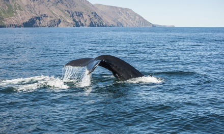 $75 for a Whale-Watching Tour and Museum Visits for Two from Whale Research EcoExcursions ($150 Value)