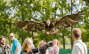 Valkerij Dominique - BE: Workshop valkenier met roofvogels en uilen voor 2, 4, 8 of 12 personen bij Valkerij Dominique
