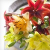 56% Off Organic Bouquets and Treats