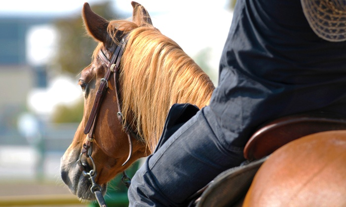 Nicole Curry Show Horses - Colton: One or Three 30- or 60-Minute Horseback-Riding Lessons at Nicole Curry Show Horses (Up to 64% Off)