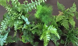 Jardin Terrariums Llc: $6 for $10 Worth of Plants — Jardin Terrariums LLC