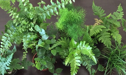 $6 for $10 Worth of Plants — Jardin Terrariums LLC
