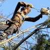 56% Off Three Man-Hours of Tree or Brush Removal