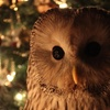 Winter Owl Experience with Gift