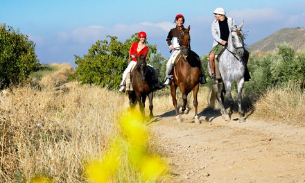 $50 for One-Hour Guided Trail Ride for Two at 49 Rivers Ranch ($100 Value)