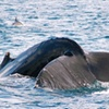 50% Off Whale Watching Cruise