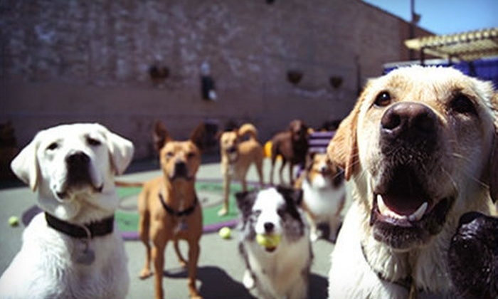 Pet Care Plus - West Town: Dog Boarding for Three or Five Nights at Pet Care Plus (Up to 54% Off)
