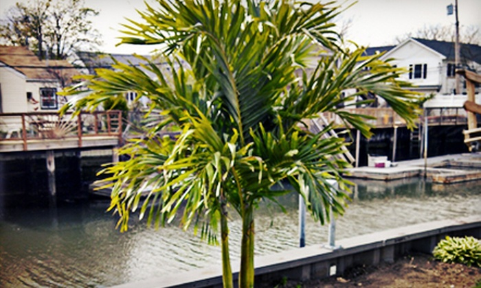 Island Wide Palm Trees - Hauppauge: Christmas Palm Tree from Island Wide Palm Trees (78% Off). Three Options Available.
