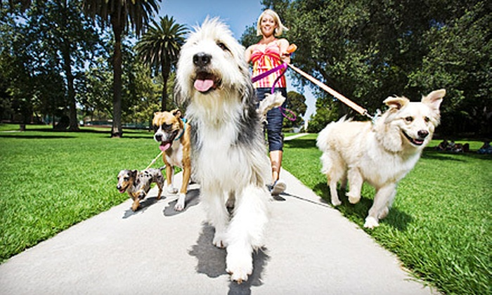 Fetch! Pet Care - Central Business District: Five 30-Minute Dog Walks from Fetch! Pet Care (76% Off)