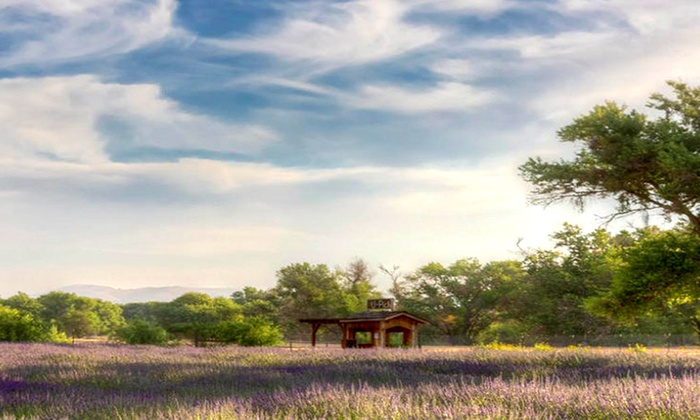 Central Coast Lavender Farm - Paso Robles: Admission for Two or Four to Central Coast Lavender Farm Bloom Festival(Up to 60% Off)