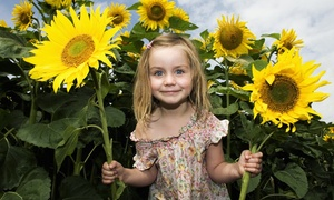 Blackburn Garden Center Sunflower Maze: Two or Four Admission and Hayride Tickets to Blackburn Garden Center Sunflower Maze (Up to 50% Off)
