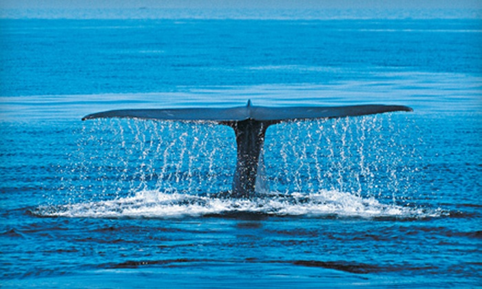 Whale Research EcoExcursions - Whale Cove Inn: $40 for Whale Watching Tour, Museum Visit, and Whale Adoption Package from Whale Research EcoExcursions ($80 Value)