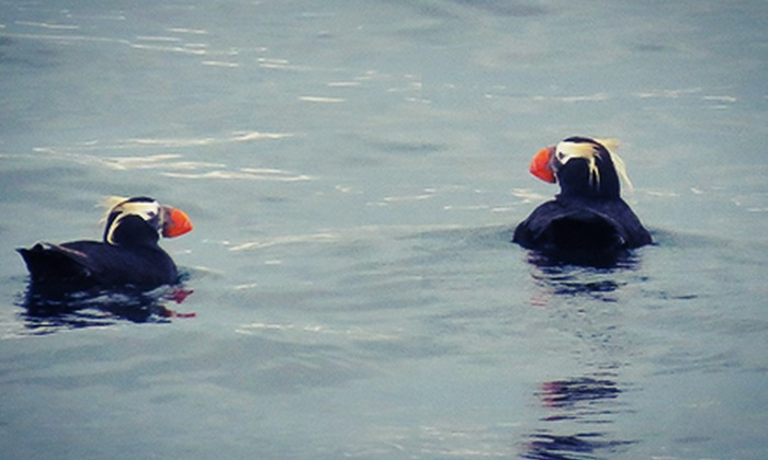 Island Mariner - Bellingham: Bird-Watching Cruise for One or Two from Island Mariner (Up to 42% Off)