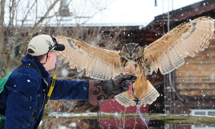 Hawkeye Bird & Animal Control - Acton: One- or Three-Hour Falconry Lesson from Hawkeye Bird & Animal Control (Up to 67% Off)