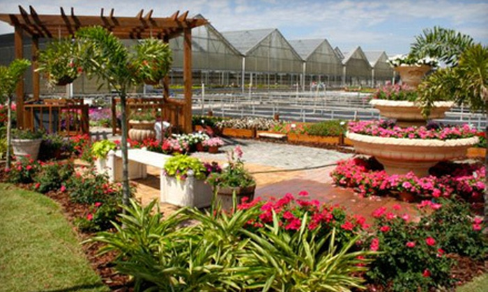 Knox Nursery, Inc. - Winter Garden: Two 4-Inch Florida Sun Hostas or $25 for $50 Worth of Flowers and Plants at Knox Nursery, Inc.