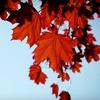 Up 76% Off Winter & Fall Tree & Shrub Preparation from American Tree
