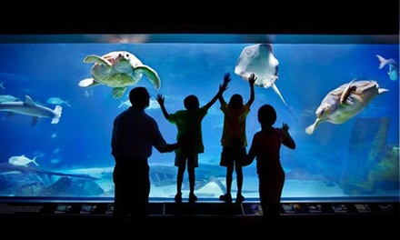 $32 for a Visit for Two to Adventure Aquarium ($51.90 Value)