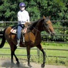 Up to 55% Off Riding Lessons in Schenectady