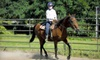 Renegade Farm - Bellevue: Renegade FarmOne-Hour Private Horseback-Riding Lesson with Optional Group Lesson at Renegade Farm in Schenectady (Up to 55% Off)