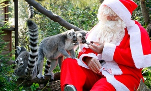 Bristol Zoo Enterprises: Enchanted Christmas Evenings at Bristol Zoo with 2016 Admission Tickets: Adult (£12), Adult & Child (£22), Family (£44)