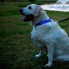 Up to 70% Off LED Dog Collars and Leashes