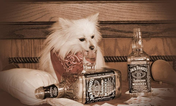 Four Sisters Old Time Photo LLC - Pigeon Forge: 60-Minute Pet Photo Shoot with Prints from Four Sisters Old Time Photo LLC. (70% Off)