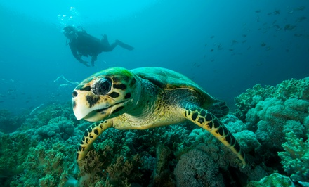 Scuba-Certification Course and Catalina Island Weekend Getaway for One or Two from PCH Scuba (62% Off)
