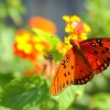 The Butterfly Zoo – Half Off Visit