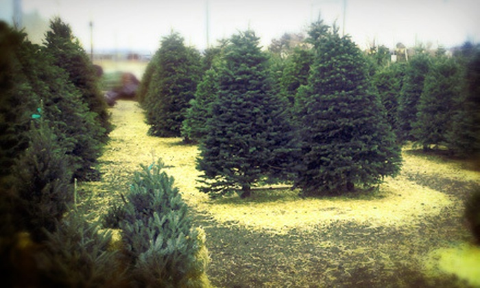 Tree Land Christmas Trees - Multiple Locations: Noble or Fraser Fir Christmas Tree at Tree Land Christmas Trees (Half Off). Two Options Available.